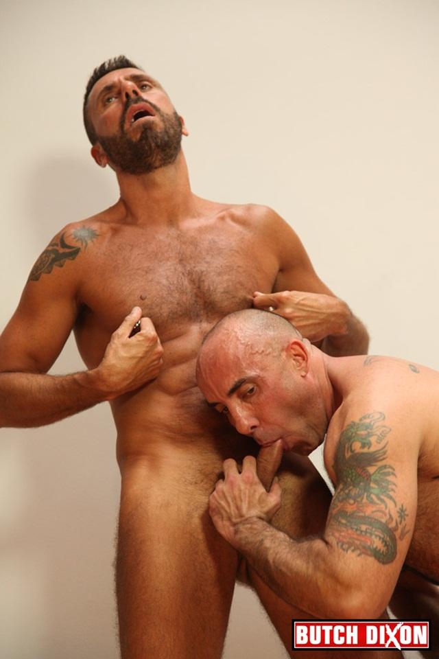 italian stallion gay jpg 1152x768